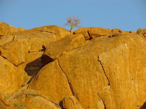 Lone tree at Dusk (Dsc01406)