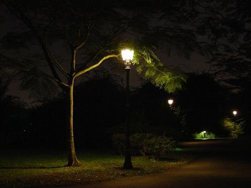 Botanic Gardens at Night (Dsc03223)