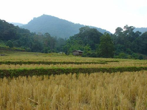 7a. Scenery at Doi Inthanon (Dsc02540)