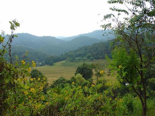 7b. Scenery near Doi Inthanon (Dsc02552)